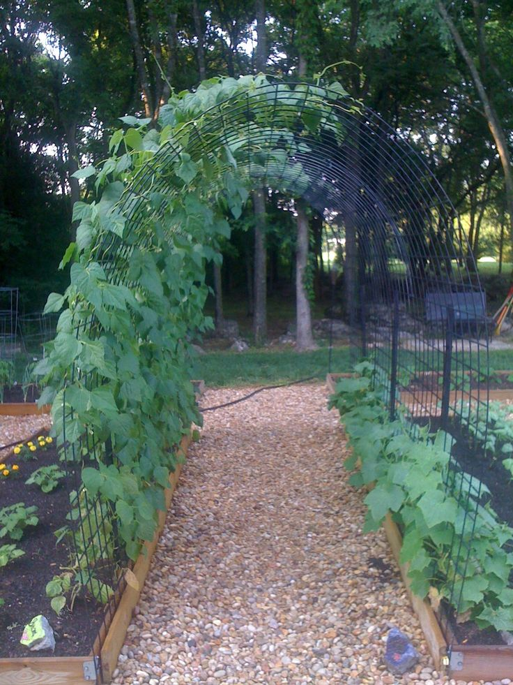 Garden Arch Trellis made of Cow Panels: that's not an arch but a small tunnel.  Awesome!