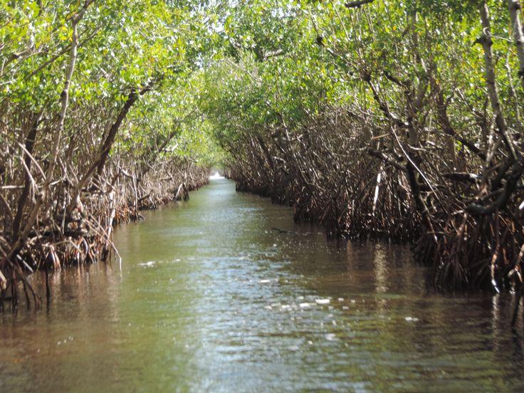 Everglades, Key West, FL