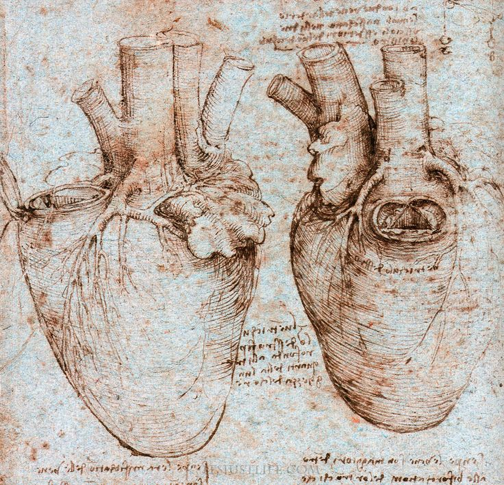 da vinci drawings - heart -  'where the dead ones went the living were not far distant'