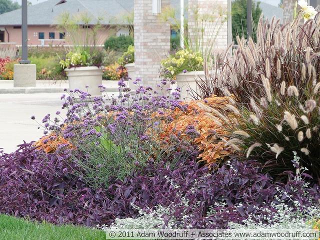 Pennisetum setaceum 'Rubrum', Solenostemon x 'Rustic Orange', Tradescantia pallida, Helichrysum petiolare, Verbena bonariensis.