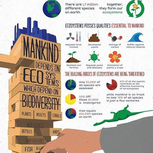 """Interesting infographic. How can we use this info to modify or lifestyles to be more """"biodiversity friendly""""?"""
