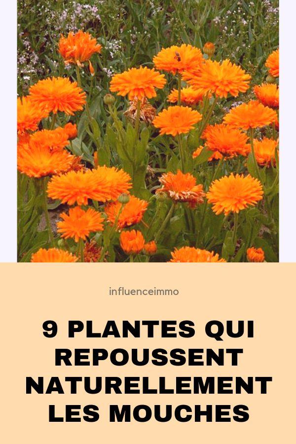 nine plantes qui repoussent naturellement et efficacement les mouches