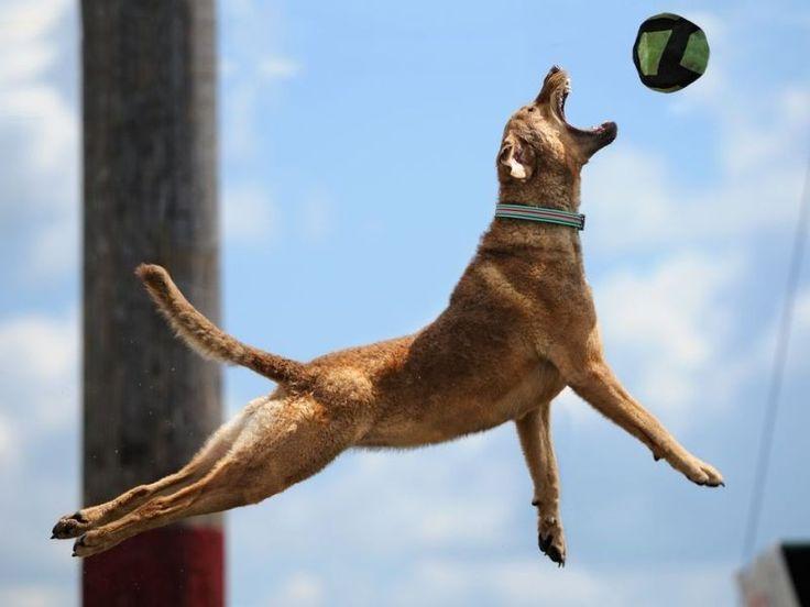 118 best hundewelt images on pinterest doggies health and dog owners. Black Bedroom Furniture Sets. Home Design Ideas