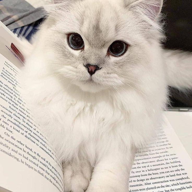 Cat Booklover Cutenessoverload Bild Kittens Hub Instagram Wallpapers Screensavers Inspo Pretty Cats Cat Day Cute Cats