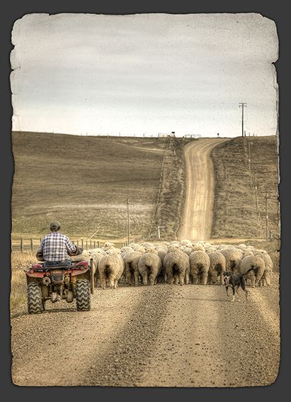 Onwards and Upwards - New Zealand farming scene by Christchurch photographer, Nathan Secker. Available in canvas and paper art-prints from www.imagevault.co.nz
