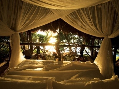 Dreamy!Beds Beds, Private Island, Dolphins Islands, Sweets Dreams, Canopies Beds, House, Bedrooms, Places, Mornings