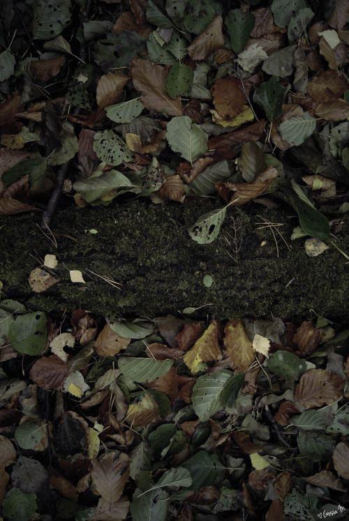 by ♡Gosia M more: http://xgosia-mx.tumblr.com   &   https://www.facebook.com/gosiamphoto  #forest #wood #gosiam #dark