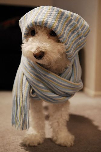 Awesomely cute little pup all geared up to face winter's wrath. cute