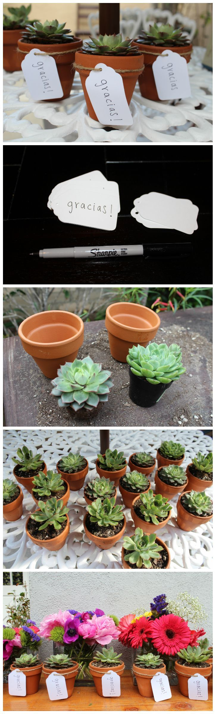 Party favors, fiesta, cinco de mayo, mexican themed, birthday party, succulents