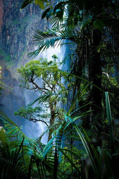 el bosque (lluvioso) (rain) forest