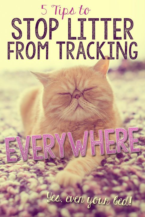 5 Tips to Stop Litter from Tracking Everwhere | eBay