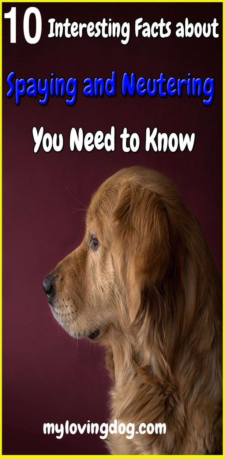 Some Dog Owners Think Spay Neuter Surgery Is Too Invasive Or Dangerous For Their Dog To Undergo Never Fear Get The Truth Ab Dog Spay Big Dog Names Dog Health