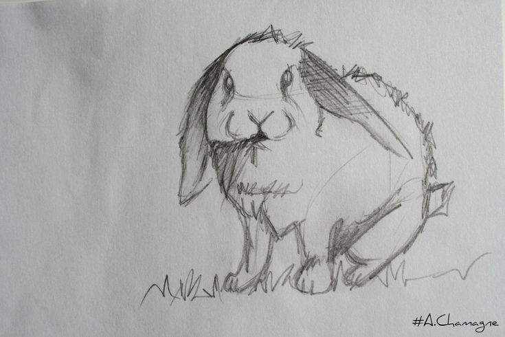 Lapin dessin Passion Of drawing A Chamagne