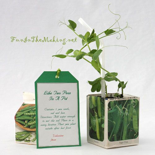 A great idea for a gardeners birthday, wedding favors etc *****  Like Two Peas In A Pot Valentine Craft: A Plant Your Own Peas Kit