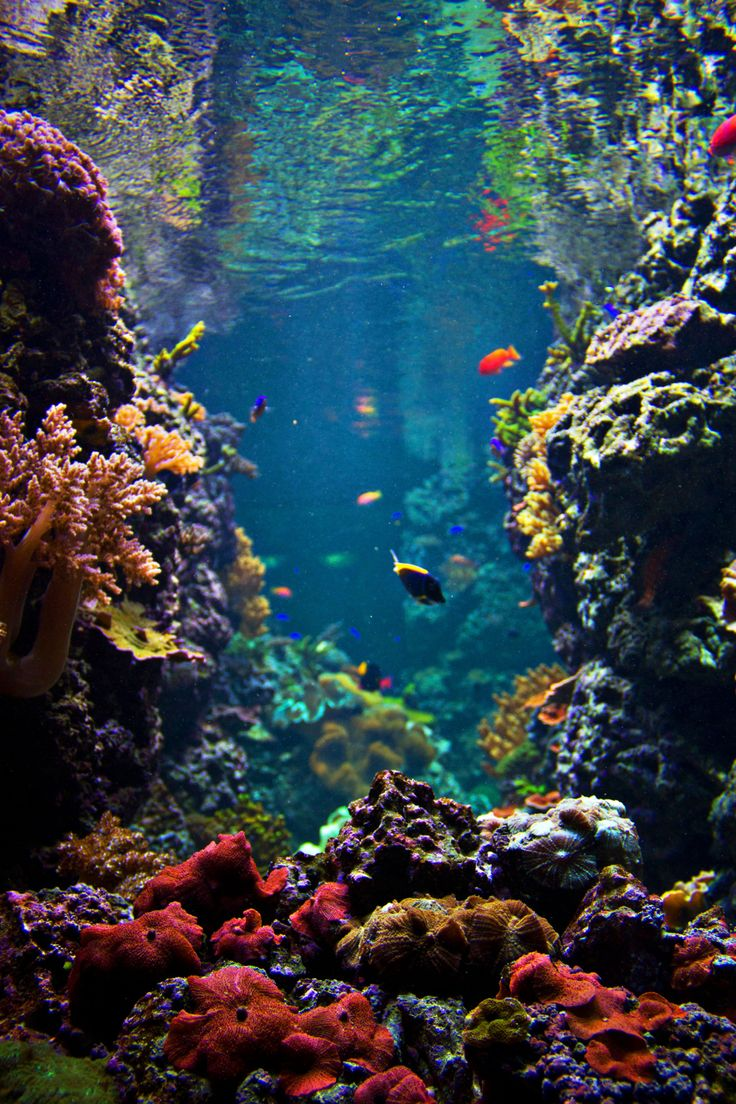 just look at the world around you right here on the ocean floor, such wonderful things surround you! What more are you looking for? Under the sea...