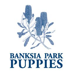 About | Banksia Park Puppies