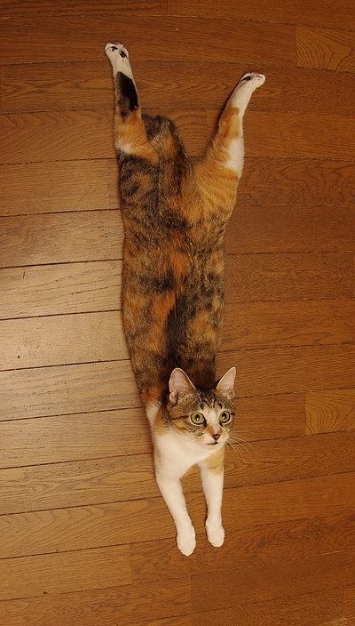 """""""A cat can work out, mathematically, the exact place to sit that will cause the most inconvenience."""" --Pam Brown"""