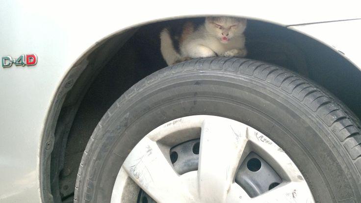 I need a lift!