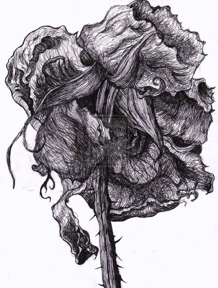 decaying flowers drawings - Google Search