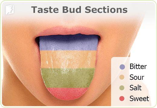Burning tongue - Taste bud sections