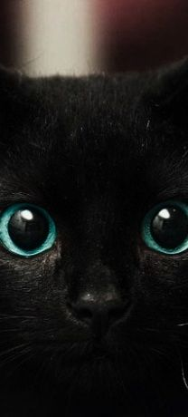 Black Kitty with beautiful blue eyes. Go to www.YourTravelVideos.com or just click on photo for home videos and much more on sites like this.