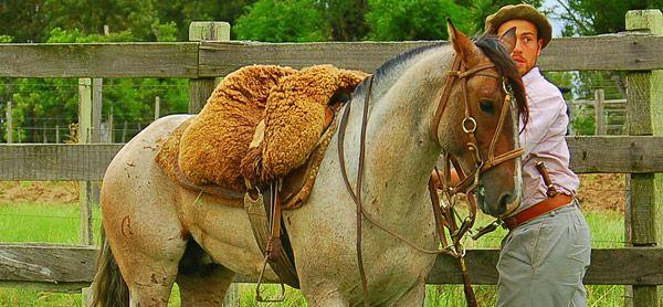 Brazilian/Mongolian saddle