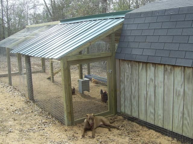 how to build a covered chicken run