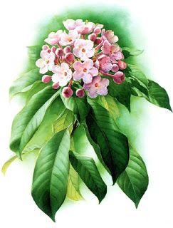 Коллекция картинок: Китайская флора Зенг Ксяо Лянг