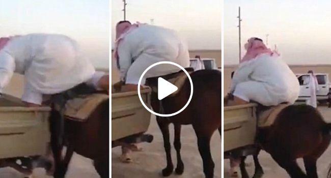 A Reação Do Cavalo Mostra Como Este Homem Precisa Urgentemente De Emagrecer