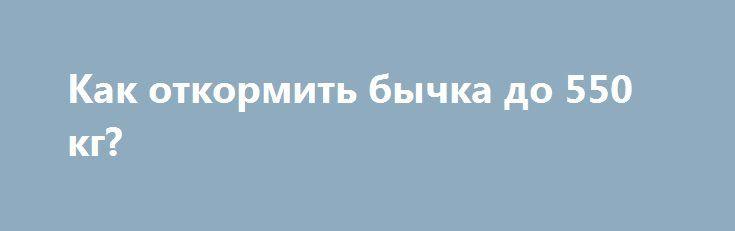 Как откормить бычка до 550 кг? http://kamagro.ru/