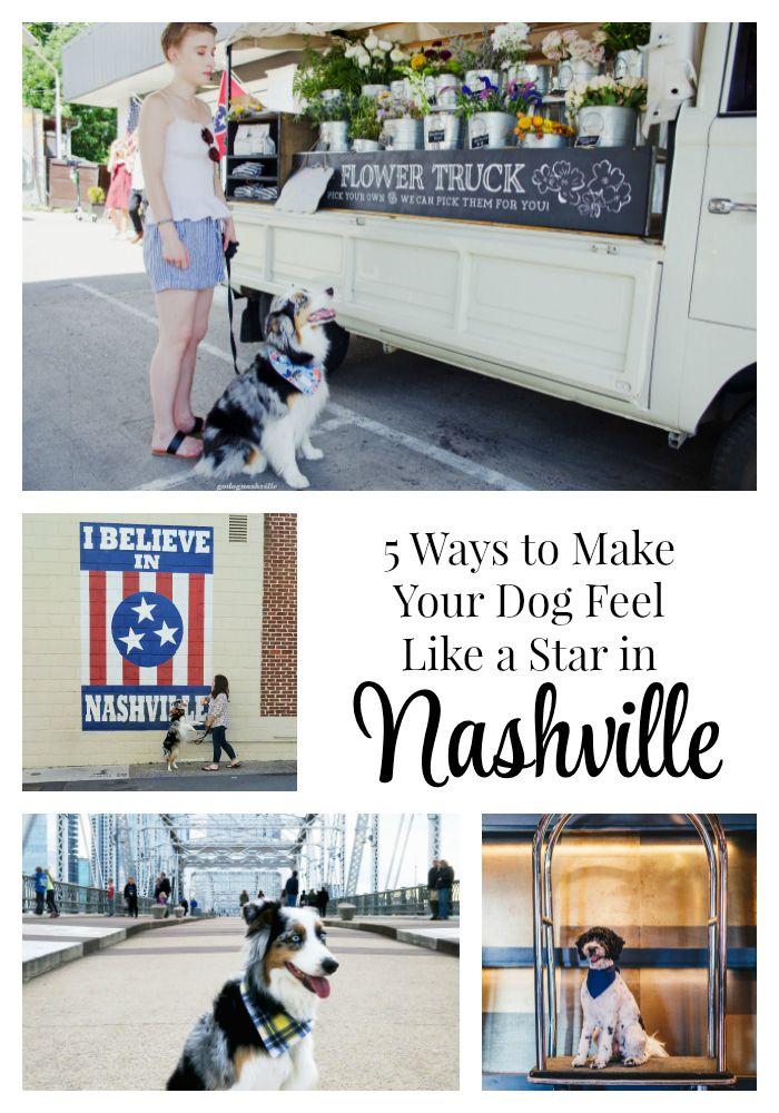 5 Ways To Make Your Dog Feel Like A Star In Dog Friendly Nashville Dog Friends Dog Travel Your Dog