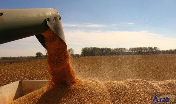 Egypt purchases 120,000 tons of Russian wheat
