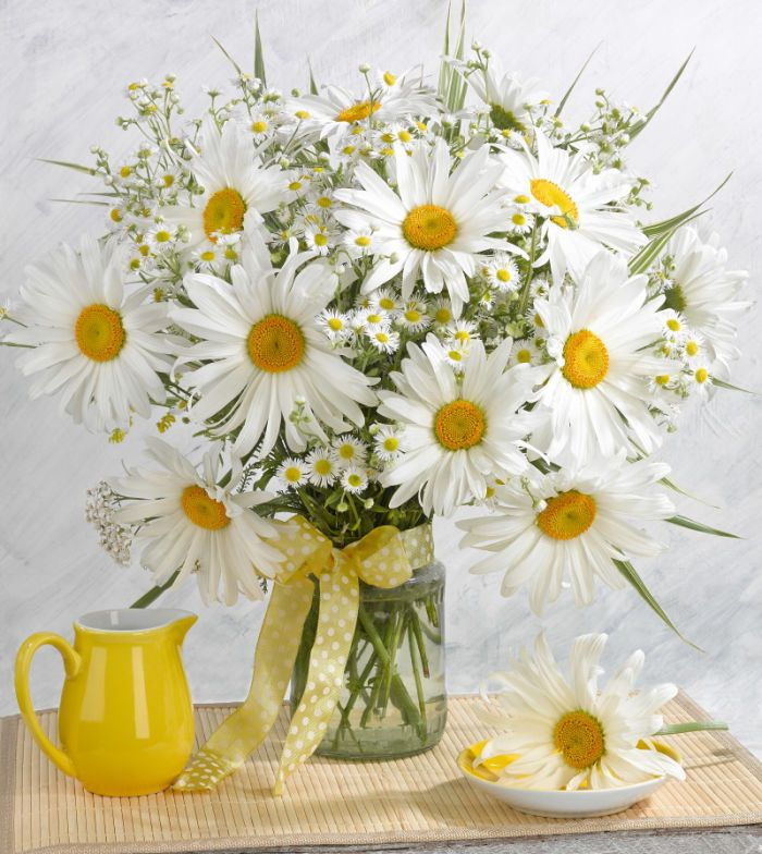 774 best Papatya images on Pinterest | Margarita flower, Daisies and ...