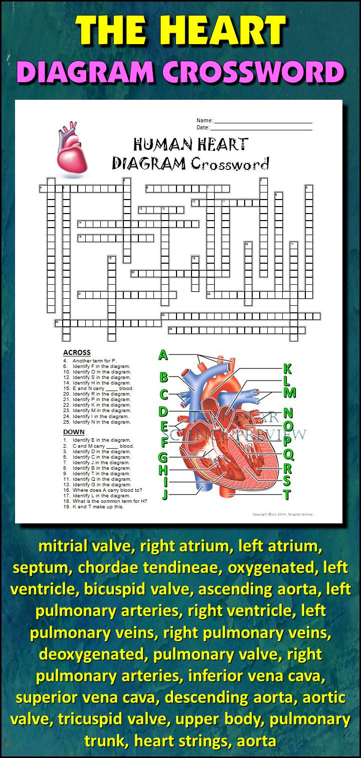 23 best my anatomy images on pinterest human body anatomy and heart crossword with diagram editable ccuart Choice Image