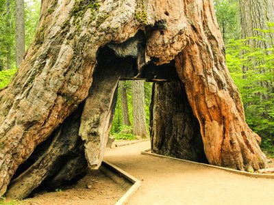 Things to do in Sequoia and Kings Canyon national parks — whether you have a 3-day weekend or just a day