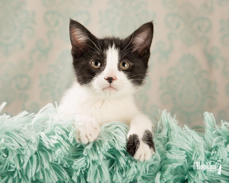 Meet Lucy! At nearly 10 weeks she is ready to say goodbye to her foster home and hello to her forever home.  Email me to meet her foster Mom.   #adoptme #adopt #cats #saturdaymorning #catsoftwitter #fostercat #catphotography #rescuepetsofinstagram #weeklyfluff #adoption #kitten #catsofinstagram #adoptdontshop #chestercounty #mainlinepa #exton #chestersprings #lititz #downingtown #lancaster #brandywinevalley #glenmoore #thorndale #wawaset #marshalton #westchester #4thofjuly #4thofjulyweekend