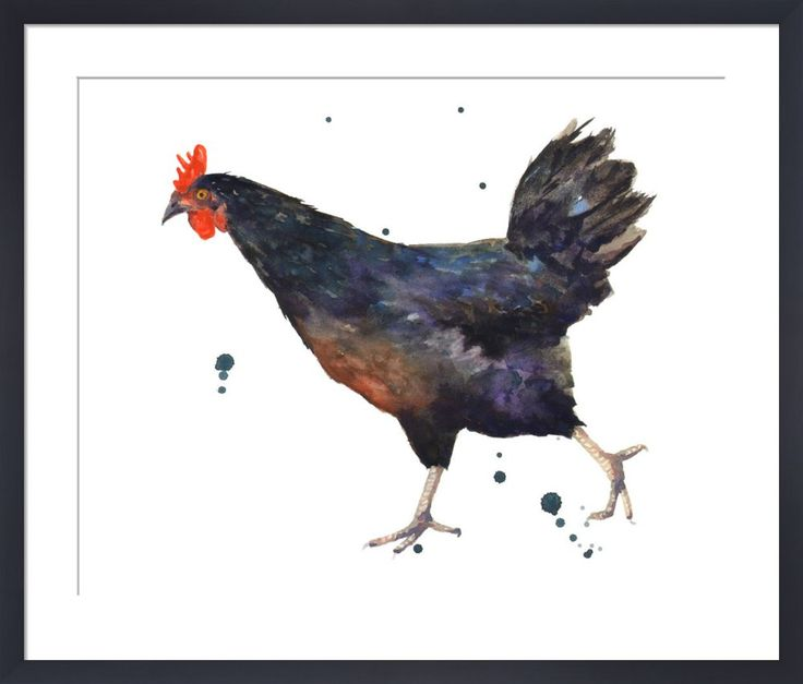Black Hen Art Print by Alison Fennell at King & McGaw
