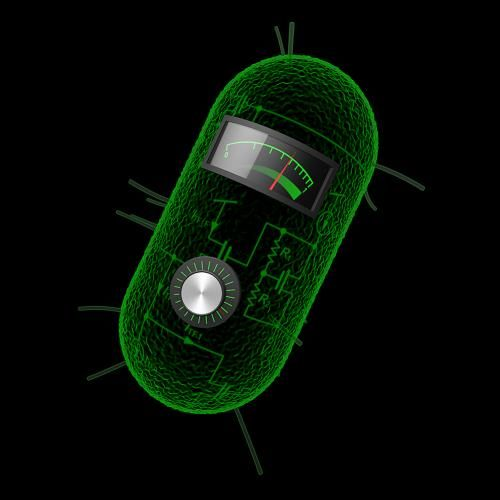 17 best science images on pinterest robot robotics and robots have transformed bacterial cells into living calculators that can compute logarithms divide and take square roots using three or fewer genetic parts fandeluxe Images