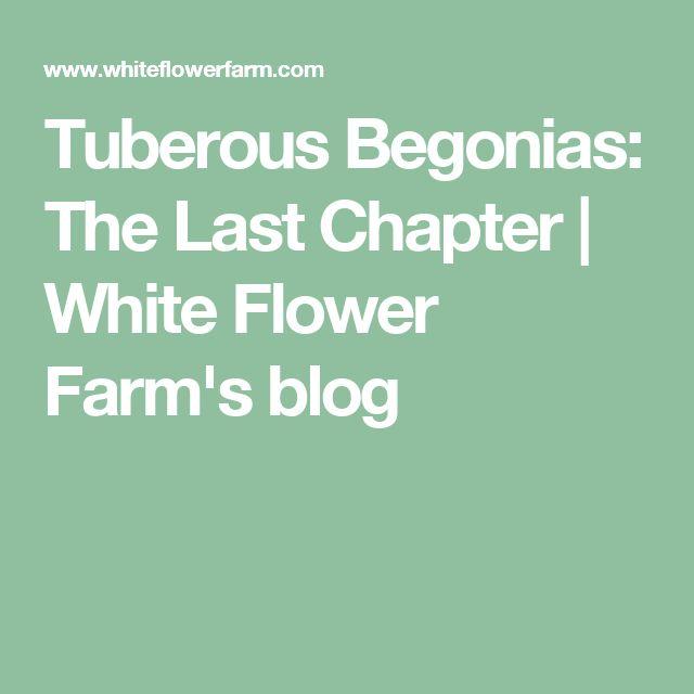 Tuberous Begonias: The Last Chapter | White Flower Farm's blog