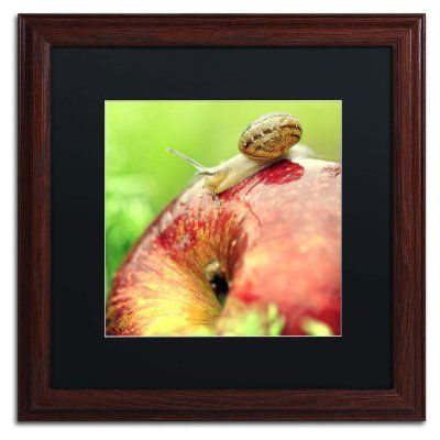 Trademark Fine Art The Very Hungry Snail Framed Art by Beata Czyzowska Young Brown Frame/Black Matte - BC0152-W1616BMF