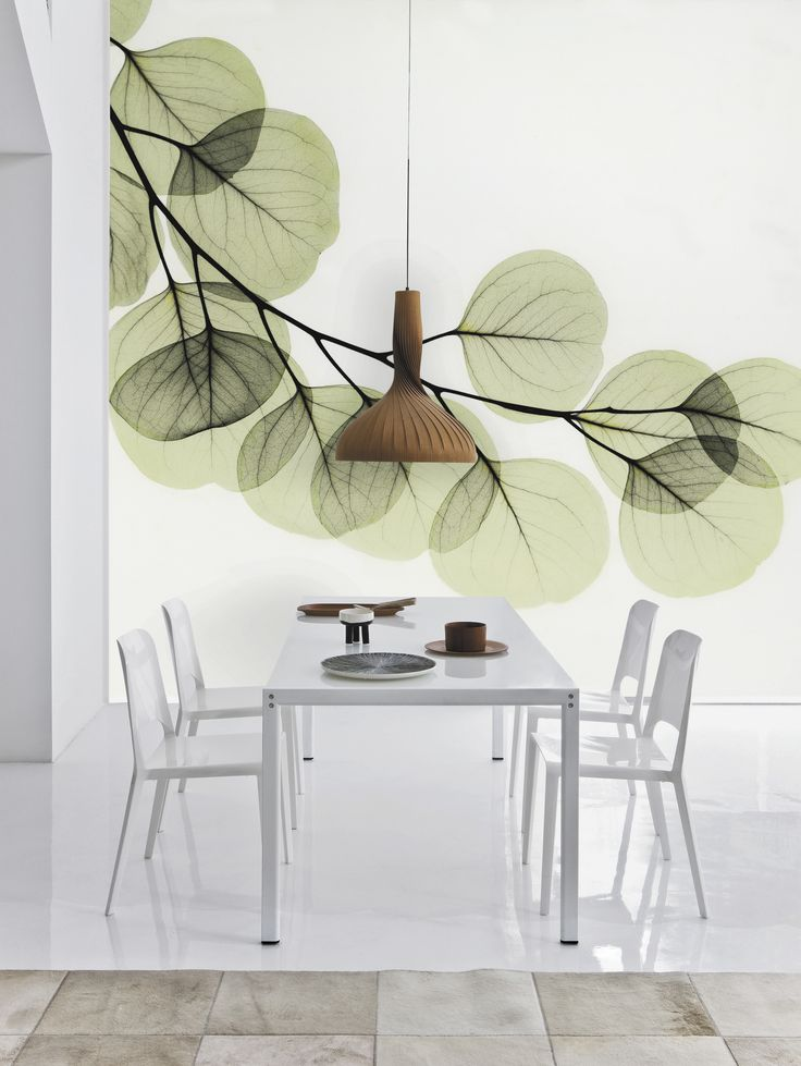 Such a delicate but contemporary image  -Beyond Light - Eucalyptus - by Albert Koetsier from Photowalls.