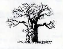 Image result for hand drawings of Baobab trees