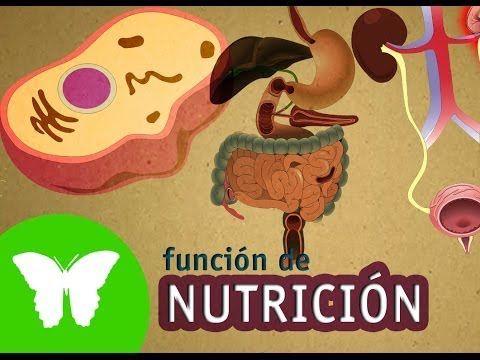 La Eduteca - El aparato digestivo - YouTube