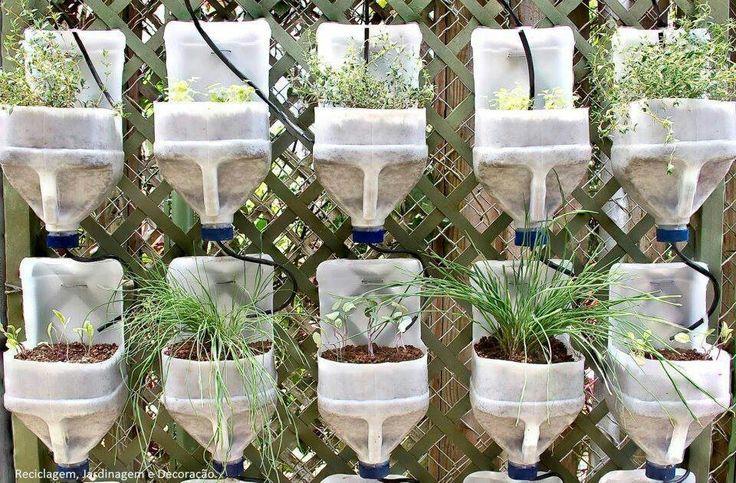 milk jug garden