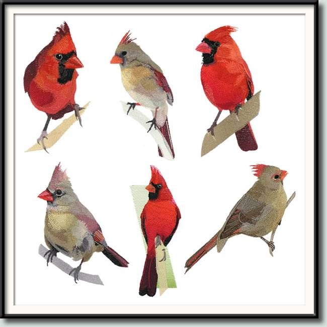 Cardinals II Co... Hunter Rawlings Facebook