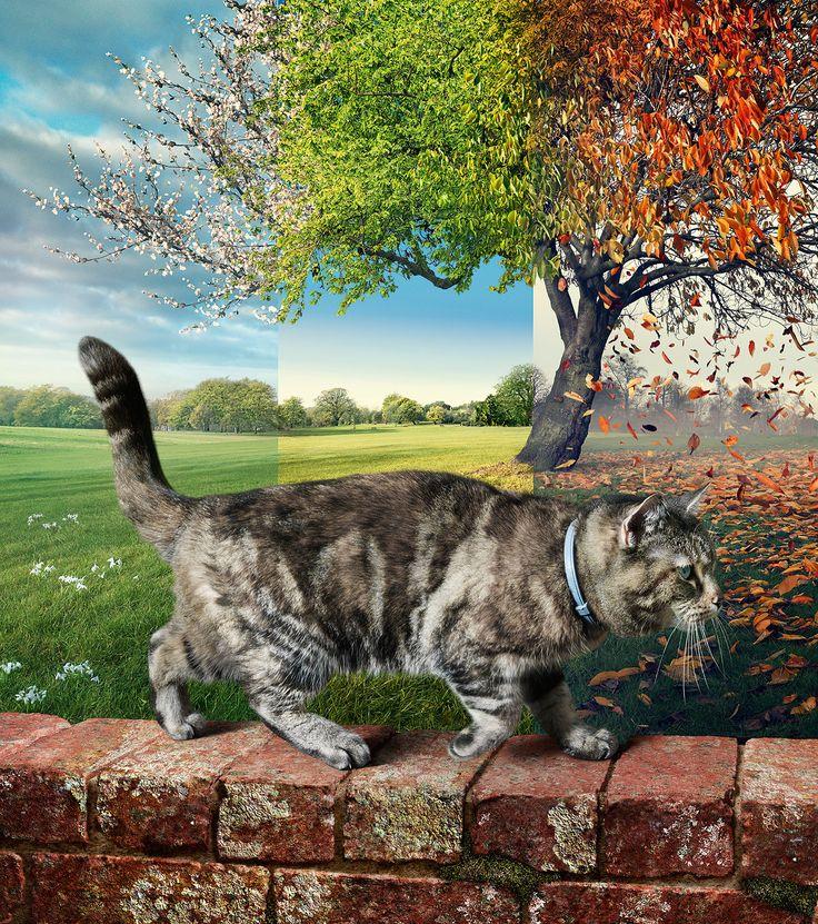 ¡Este es un #gato que está a salvo de #pulgas y #garrapatas con su collar #Seresto! Más sobre  tu #gato y Seresto en: http://www.seresto.es/es/seresto-para-gatos/ #desparasitacion #parasitos #ectoparasitos #antiparasitario #Gatos #PetLovers #CatLovers #AnimalLovers