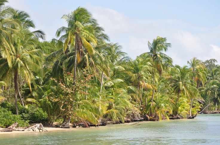 Bocas del Drago, the road to the Starfish Beach, Panama