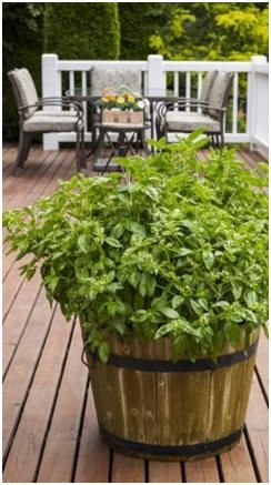 Have That New Deck!  Click to print dozens of free, do it yourself deck building plans.