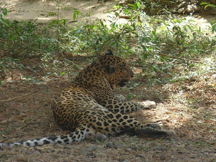 Zeilad Wildlife Sanctuary - in Manipur, India