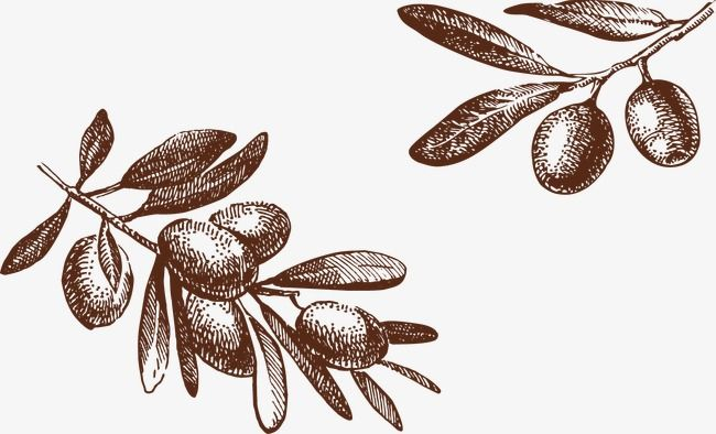Olive Tree Png And Vector Olive Tree Vector How To Draw Hands